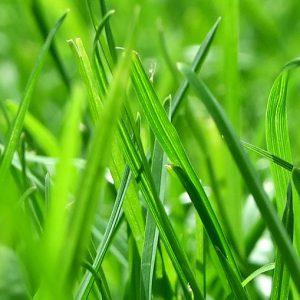 Gras Bild lang