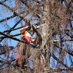 Bäume schneiden Gartenservice Firma kompostieren.at