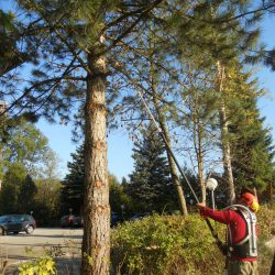 Bäume stutzen Gartenservice kompostieren.at
