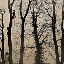 Baum schneiden Service kompostieren.at