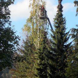 Baumschnitt Oberösterreich kompostieren.at