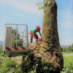 Baumschnitt Service Mondsee kompostieren.at