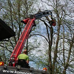 Grünschnitt Mondseeland Baumschneiden 4 kompostieren.at